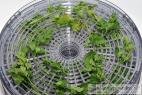 Recept Domáca vegeta - sušená zelenina bez glutamanu - sušená petržlenová vňať