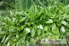 Recept Zeleninový šalát s valeriánom - valerian